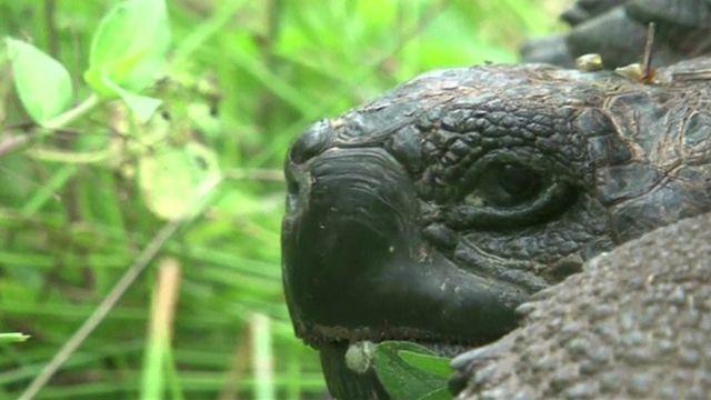 The new tortoise