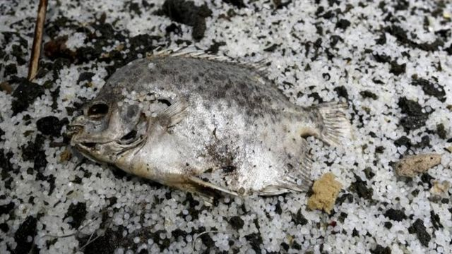 a dead fish from ship fire