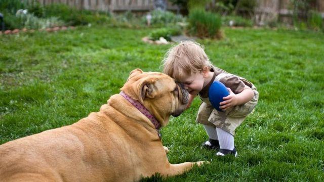 Niño jugando con un perro