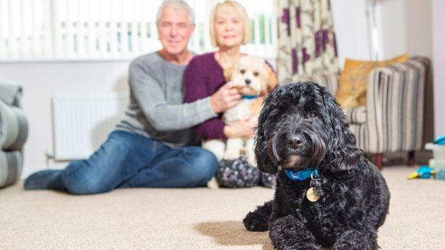 Peterborough Pets at Home 'sliced dog's tongue'
