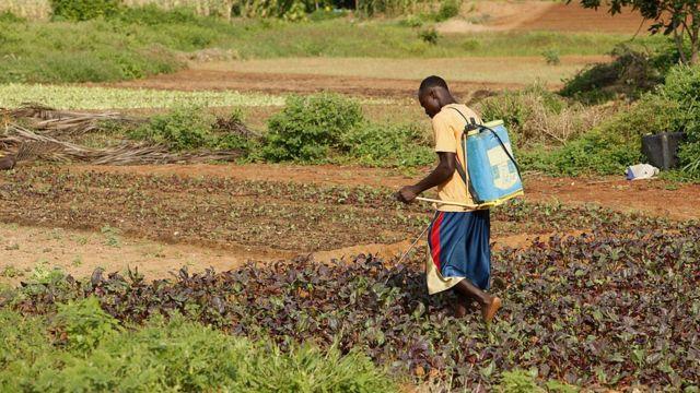 Un fermier africain répand des pesticides.