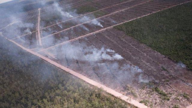 Incêndios em área de floresta vista de cima em Papua, na Indonésia