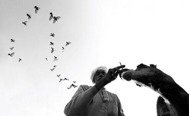 Човек, камила и птице