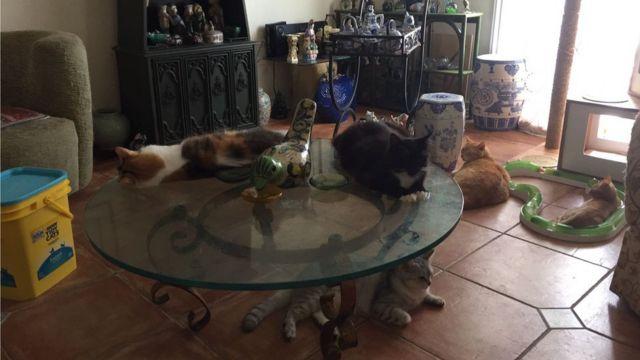 Gatos de Suely Caramelo