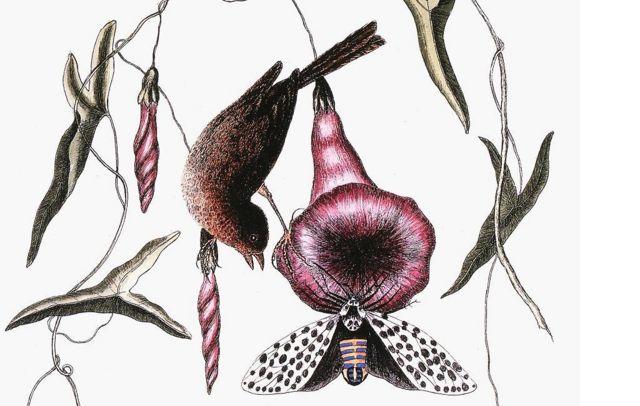 """Antes y después de la humana, la sangre del gorrión era """"medicinal"""", pues se pensaba que esta ave sufría de epilepsia."""