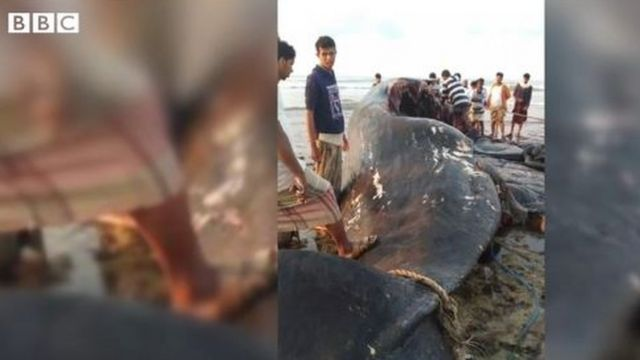 Des pêcheurs yéménites trouvent une valeur de 1,5 million de dollars d'ambre gris dans le ventre d'une baleine
