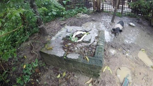 चाय बागान में टूटा हुआ टॉयलेट