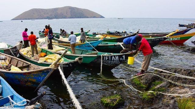 Des pêcheurs sur des pirogues près de l'île Migingo sur le lac Victoria.