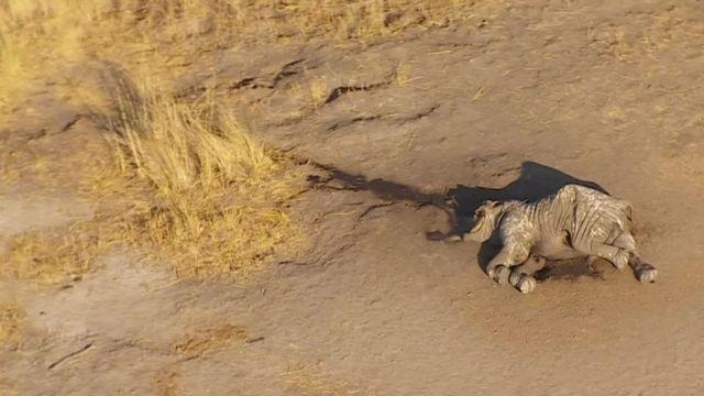 হাতির দাঁতের চাহিদা বাড়ছে আর সেকারণে এই প্রাণীটি শিকারিদের টার্গেটে পরিণত হয়েছে