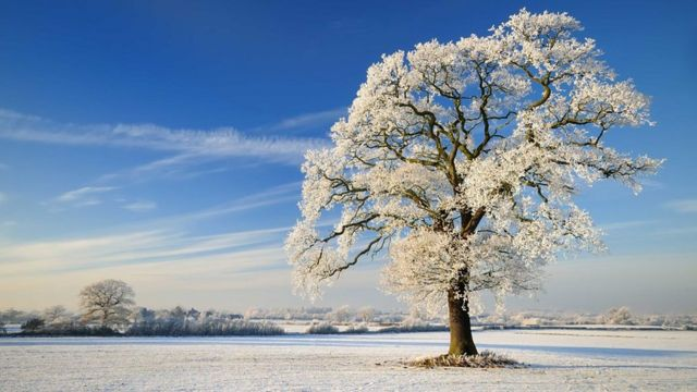 • زمستان سراسر نیمکره شمالی را فرا گرفته اما همه جا با برف پوشیده نشده است