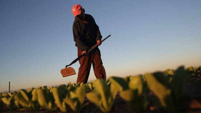 Un trabajador en una granja en California.