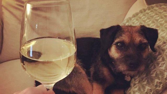 Vinho branco e cachorro