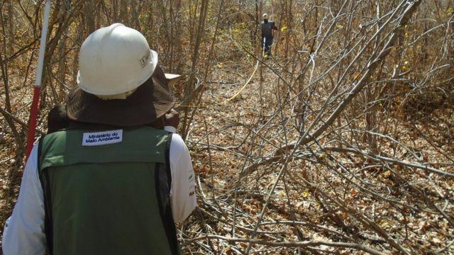 Funcionários do Serviço Florestal Brasileiro em trabalho de campo em 2017