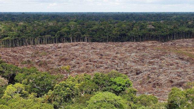 Desmatamento da Amazônia, em foto de arquivo