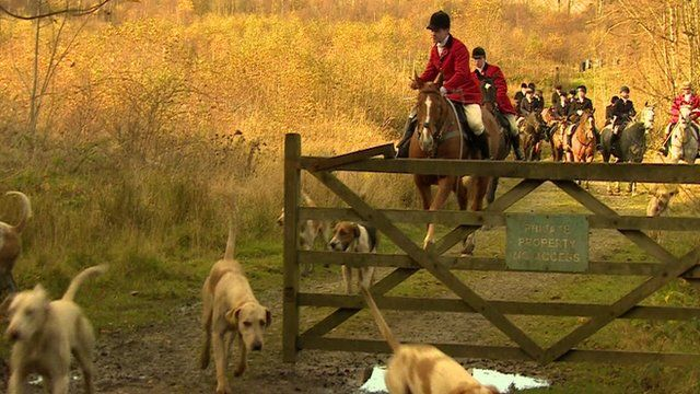 Fox hunt with dogs