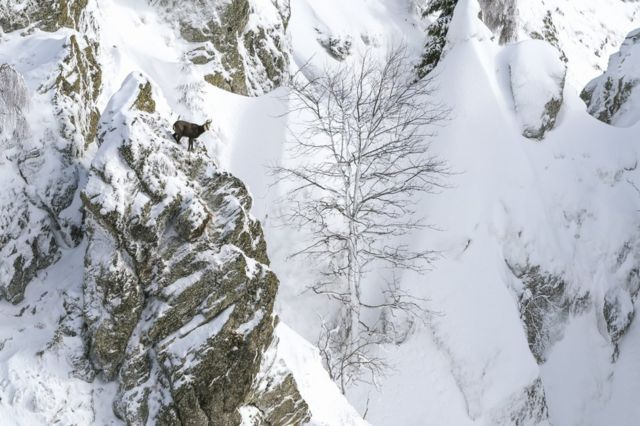 The side of a snow-covered mountain