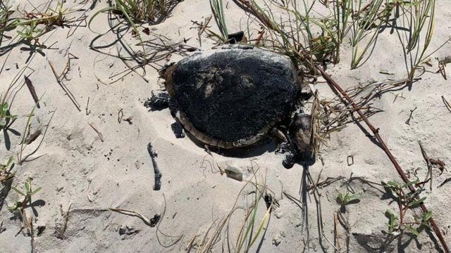 Tartaruga encontrada morta na Praia da Redinha, Natal (RN), em 21 de setembro