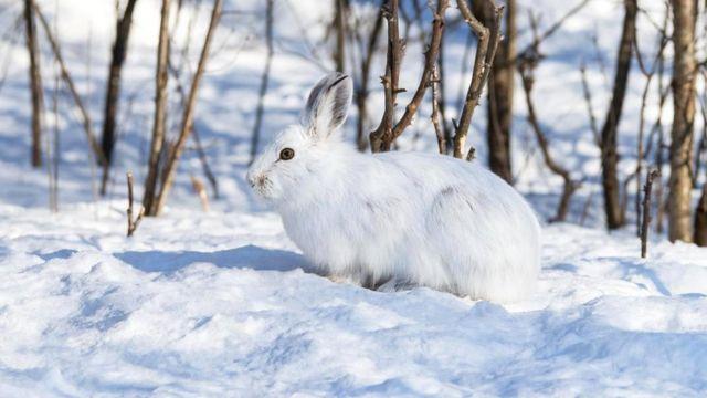 В мясе кролика так мало жира, что оно может вызвать проблемы с пищеварением