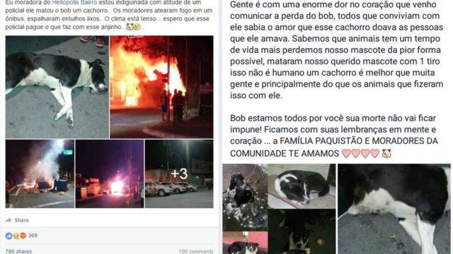 Reações no Facebook após a morte do cachorro Bob