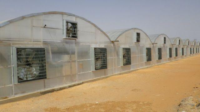 Tomato-growing facility in Dubai