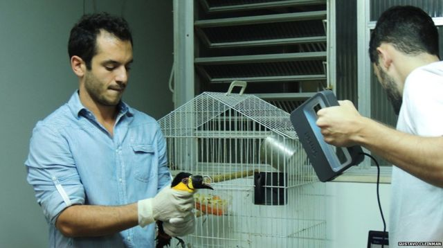 Mutilated toucan gets 3D-printed beak prosthesis