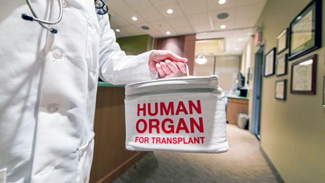 Médico segura bolsa de doação de órgãos