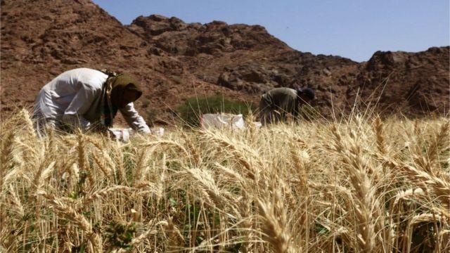ખેતરમાં ખેતી કરતી મહિલાઓ