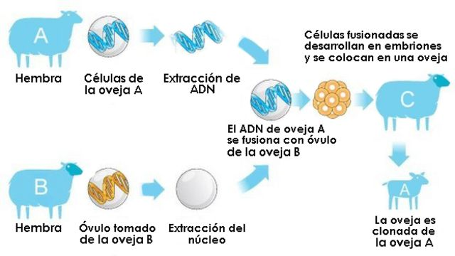 Explicación clonación