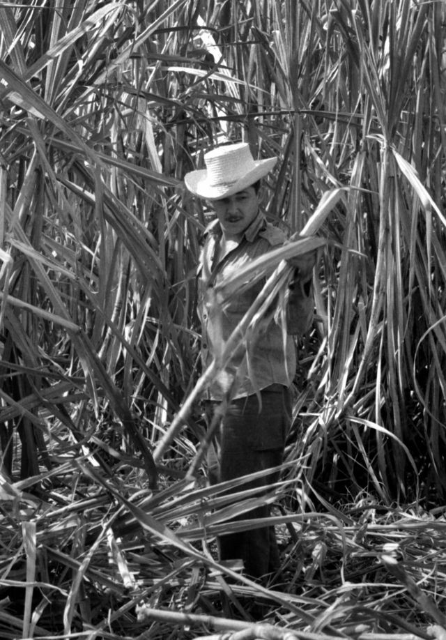 Castro cutting sugar cane. Cuba, 1970. (Photo by Gilberto Ante/Roger Viollet via Getty Images)
