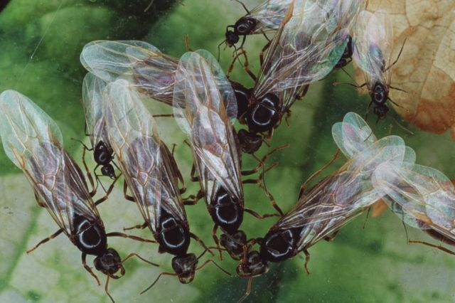 Flying ants: Swarms appear on weather map as 'rain'