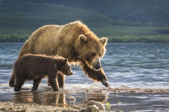 강가에 있는 어미 곰과 새끼 곰의 모습.