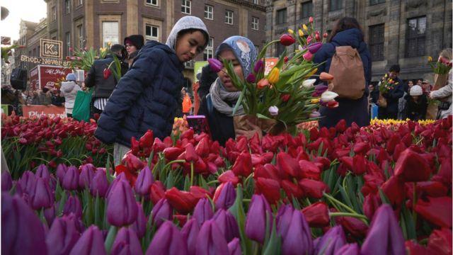 Belanda Merayakan Hari Tulip Nasional Di Amsterdam Bbc News Indonesia