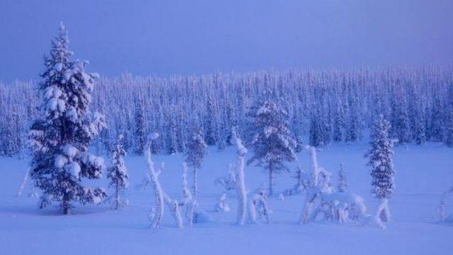 Paisaje de un bosque nevado en Finlandia.