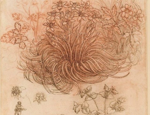 A drawing by Leonardo da Vinci labelled Star of Bethlehem and other plants, on loan to the Louvre from Queen Elizabeth II
