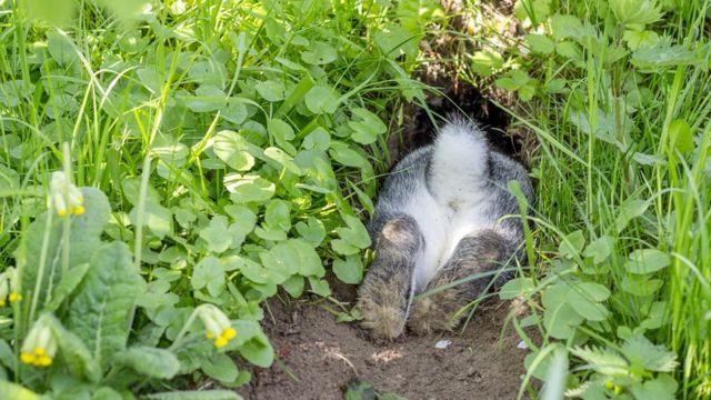 Кролики предпочитают держать все свои запасные выходы чистыми от завалов, корней и веток. А если они живут у человека, жертвой этой привычки становятся электрические провода