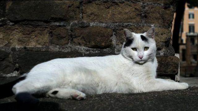 มนุษย์สามารถติดเชื้อที่มีเห็บเป็นพาหะจากแมวได้