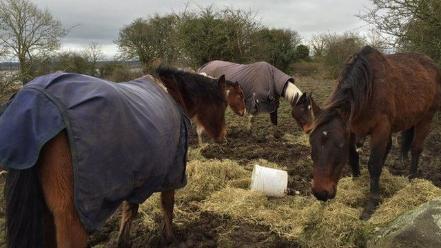 Volunteers brought hay and feed to the horses