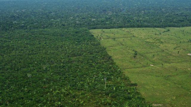Zona de la Amazonía