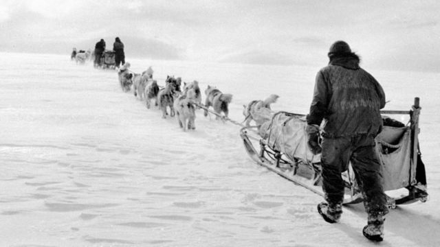 Dog sled team in the Antarctic