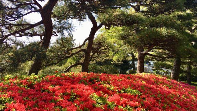 Nhật Bản có phong cảnh đẹp nhưng thời tiết khí hậu dễ thay đổi.