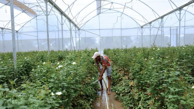 گلخانه ای در هند