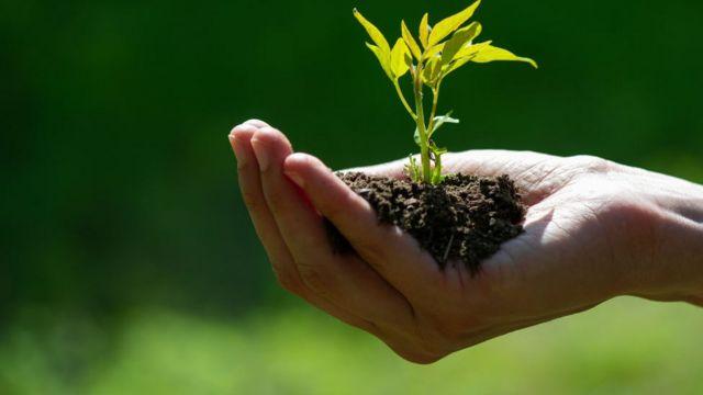 Mano sujetando tierra con una pequeña planta.