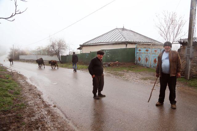 Xıdırnəbi Hacıyev (sağda) mal-qaranı sudan gətirir.
