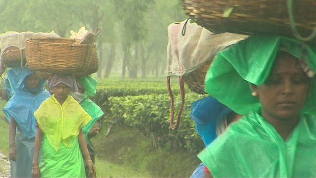 Workers on a tea estate