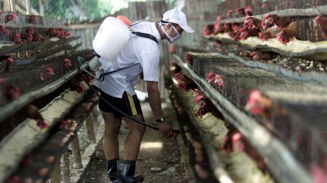 مزارع في وحدة دواجن