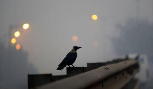 दिवाली के बाद दूसरे दिन फैला धुंआ