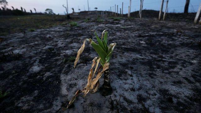 Terreno quemado en la Amazonía