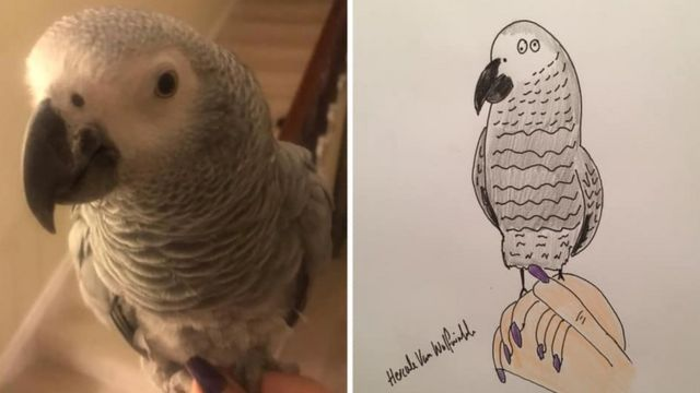 Cartoon of parrot