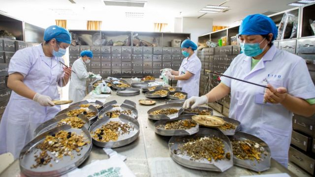 Covid 19 China Mendorong Penggunaan Pengobatan Tradisional Di Tengah Pandemi Bbc News Indonesia