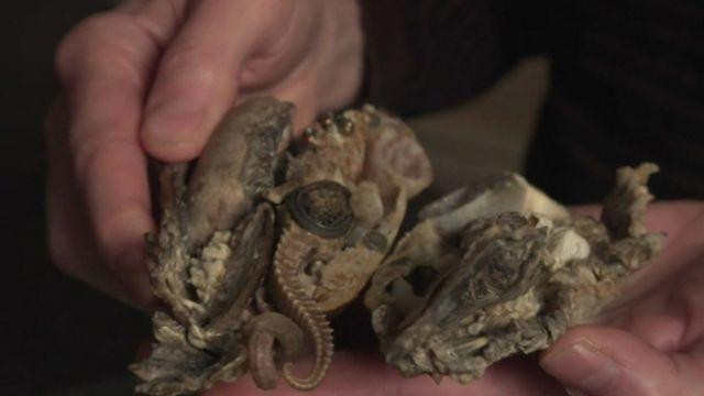Gillian Genser segura materiais naturais que usa para criar suas esculturas